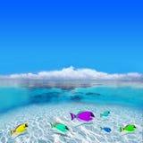 цветастые рыбы Стоковые Изображения