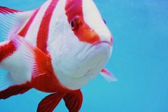цветастые рыбы Стоковая Фотография RF