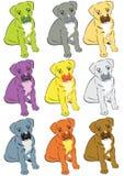 цветастые собаки Стоковая Фотография