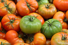 цветастые томаты Стоковое Фото