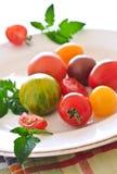 цветастые томаты Стоковые Изображения RF