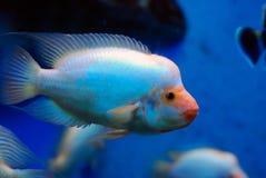 Цветастые тропические рыбы Стоковое фото RF