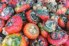 цветастые тыквы стоковое изображение