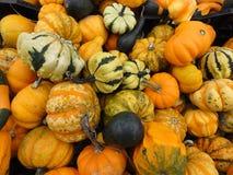 цветастые тыквы gourds Стоковое Изображение RF