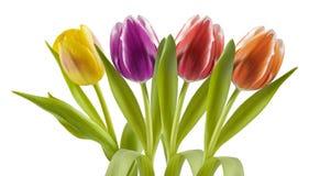 Цветастые тюльпаны в рядке стоковое фото rf