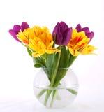 цветастые тюльпаны Стоковые Изображения RF