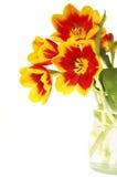 Цветастые тюльпаны в вазе Стоковое Изображение