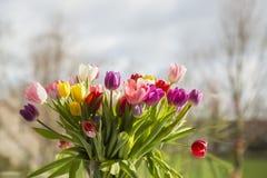 цветастые тюльпаны Стоковое фото RF