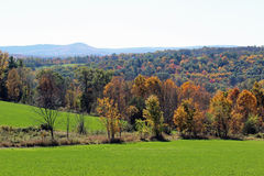 цветастые холмы Стоковое Фото