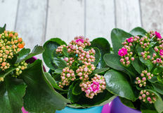 Цветастые цветки в баках Стоковые Изображения