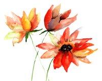 Цветки лета Стоковые Фото