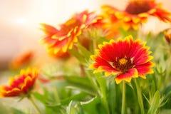 Цветастые цветки лета Стоковые Фотографии RF