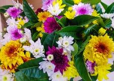цветастые цветки Цвет ярок стоковые изображения rf