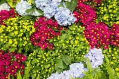Цветастые цветки Стоковая Фотография RF
