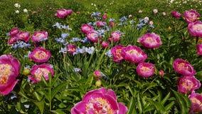 цветастые цветки стоковые фото