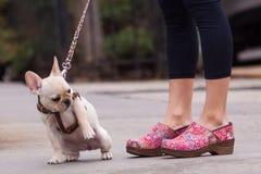 Цветастые clogs и удивленная собака. Стоковая Фотография RF