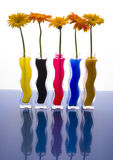 цветастые gerbers Стоковое Изображение