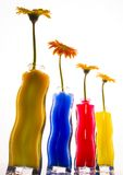 цветастые gerbers Стоковое фото RF