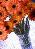 цветастые gerbers Стоковое Изображение RF