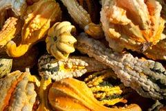 цветастые gourds малые Стоковые Изображения RF