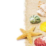 Цветастые seashells на песке Стоковое фото RF