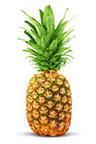 цветастый ананас Стоковые Фотографии RF