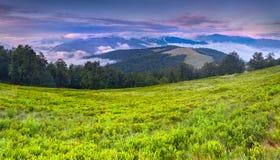 Цветастый ландшафт лета в прикарпатских горах. Стоковое фото RF