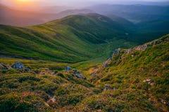 Цветастый ландшафт лета в прикарпатских горах Стоковая Фотография