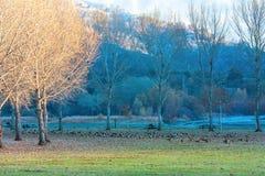 Цветастый ландшафт осени Стоковая Фотография RF