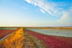 цветастый ландшафт Стоковые Фотографии RF