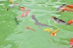 цветастый бассеин рыб Стоковая Фотография