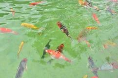цветастый бассеин рыб Стоковое Фото