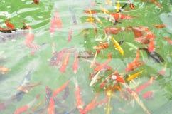 цветастый бассеин рыб Стоковые Фото