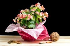 Цветастый букет различных цветков Стоковое Изображение