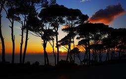 цветастый заход солнца сосенки пущи Стоковое Изображение