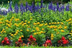 Цветастый зацветая сад цветка Стоковые Фото
