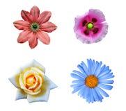 цветастый комплект цветка элементов конструкции Стоковое Изображение