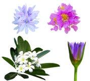 цветастый комплект цветка элементов конструкции Стоковые Изображения RF