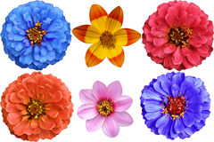 цветастый комплект цветка элементов конструкции Стоковые Изображения