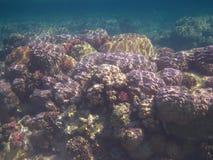 цветастый коралл Египет Стоковое Изображение RF