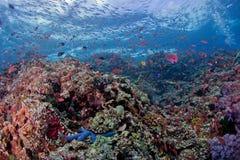 Цветастый коралл стоковое фото