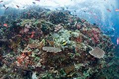 Цветастый коралл стоковое изображение