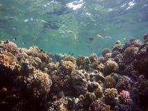 цветастый коралловый риф сток-видео