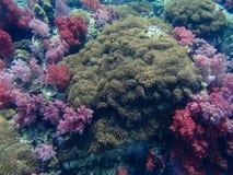 цветастый коралловый риф Стоковое фото RF