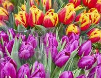Цветастый крупный план тюльпанов Стоковое фото RF