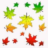 цветастый клен листьев Стоковое Изображение
