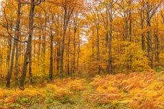 Цветастый лес падения Стоковое фото RF