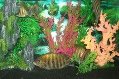цветастый подводный мир Стоковое Изображение RF