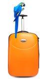 цветастый попыгай сидит перемещение чемодана Стоковая Фотография