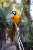 цветастый попыгай macaw стоковое изображение rf